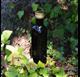 250 ml talpos stiklinio butelio tamsiai orchidėjų